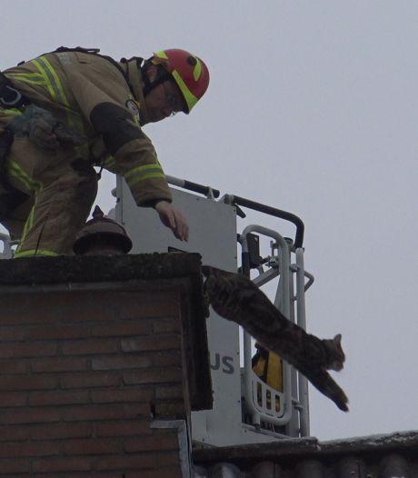 Brandweer heeft handen vol aan avontuurlijke kat bij schoorsteen