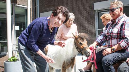 Uitzonderlijk bezoek in WZC Mariahuis: een pony!