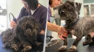 Wat een transformatie! Verwaarloosde hond verlost van 4 kg aangekoekte vacht