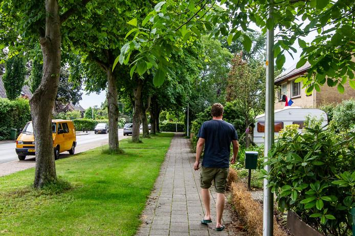 Onder meer deze kastanjebomen aan de Oerdijk worden komend najaar gekapt.