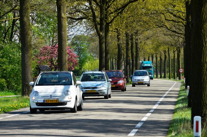 De bomen langs de Beerseweg in Diessen.
