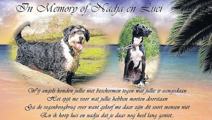 Nadja en Luci werden door de man uit IJsselstein gedood.