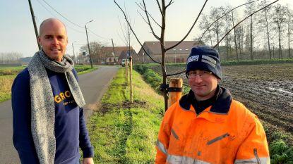 25 winterlindes aangeplant in Holdamstraat