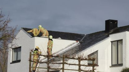 Brandweerpost Lede ontving 30-tal oproepen voor stormschade: omgewaaide bomen en losgerukte dakpannen