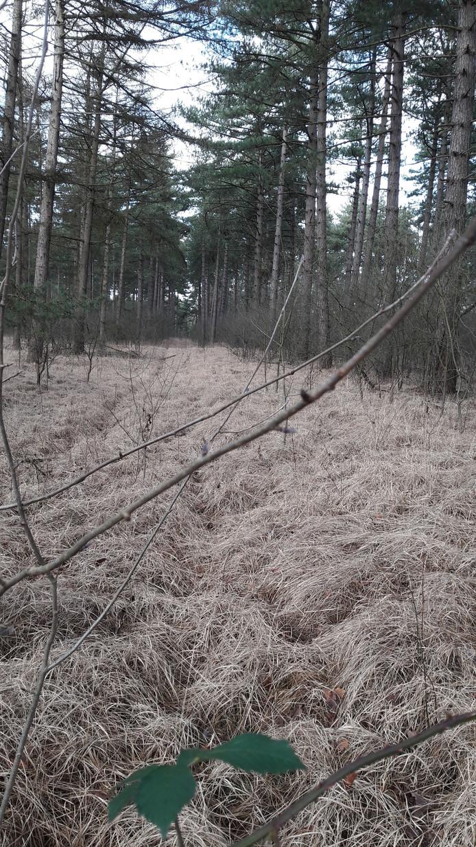Dikke lagen pijpentro in het bos van Wouwse Plantage verstikken de bodem. Een monocultuur waardoor ook insecten verdwijnen en als gevolg daarvan vogels.