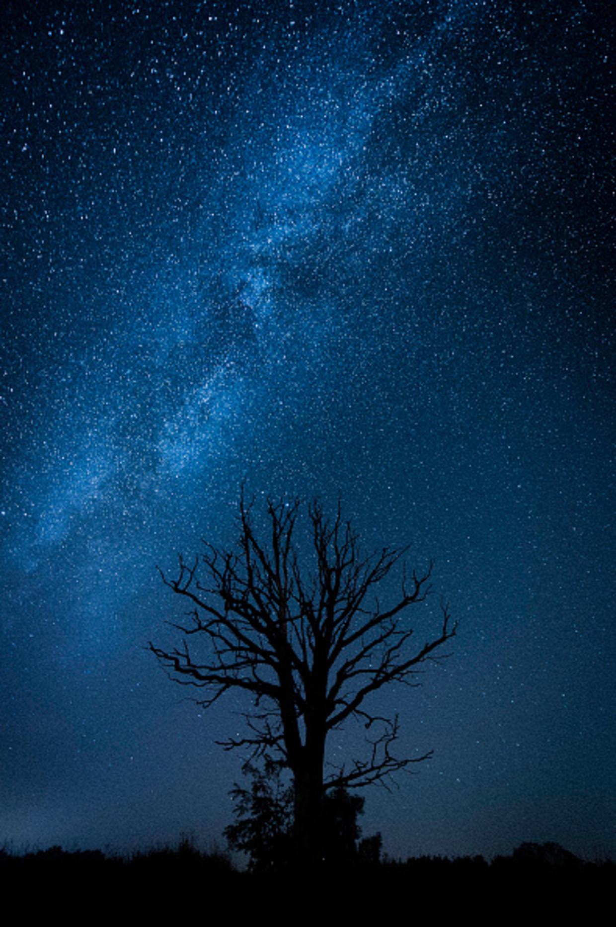 Een dode boom, met op de achtergrond de Melkweg.