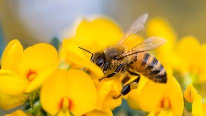 Week van de Bij geeft bijenbestand duw in de rug