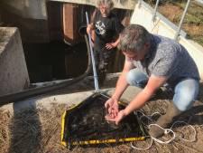 Oproep Waterschap Aa en Maas om vissen in Bakel te redden