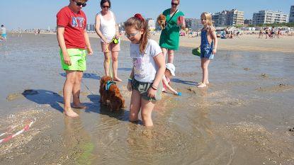 Strandgangers vergapen zich aan opborrelende zoetwaterbron in De Panne