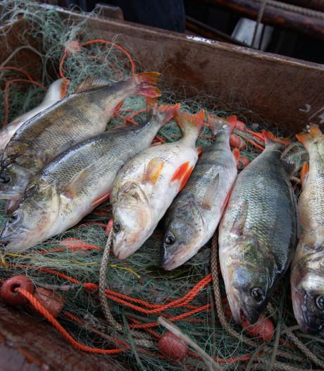 Nederlandse vissers vangen veel meer vis