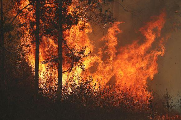 De brand in Busbys Flat gaat wild tekeer.