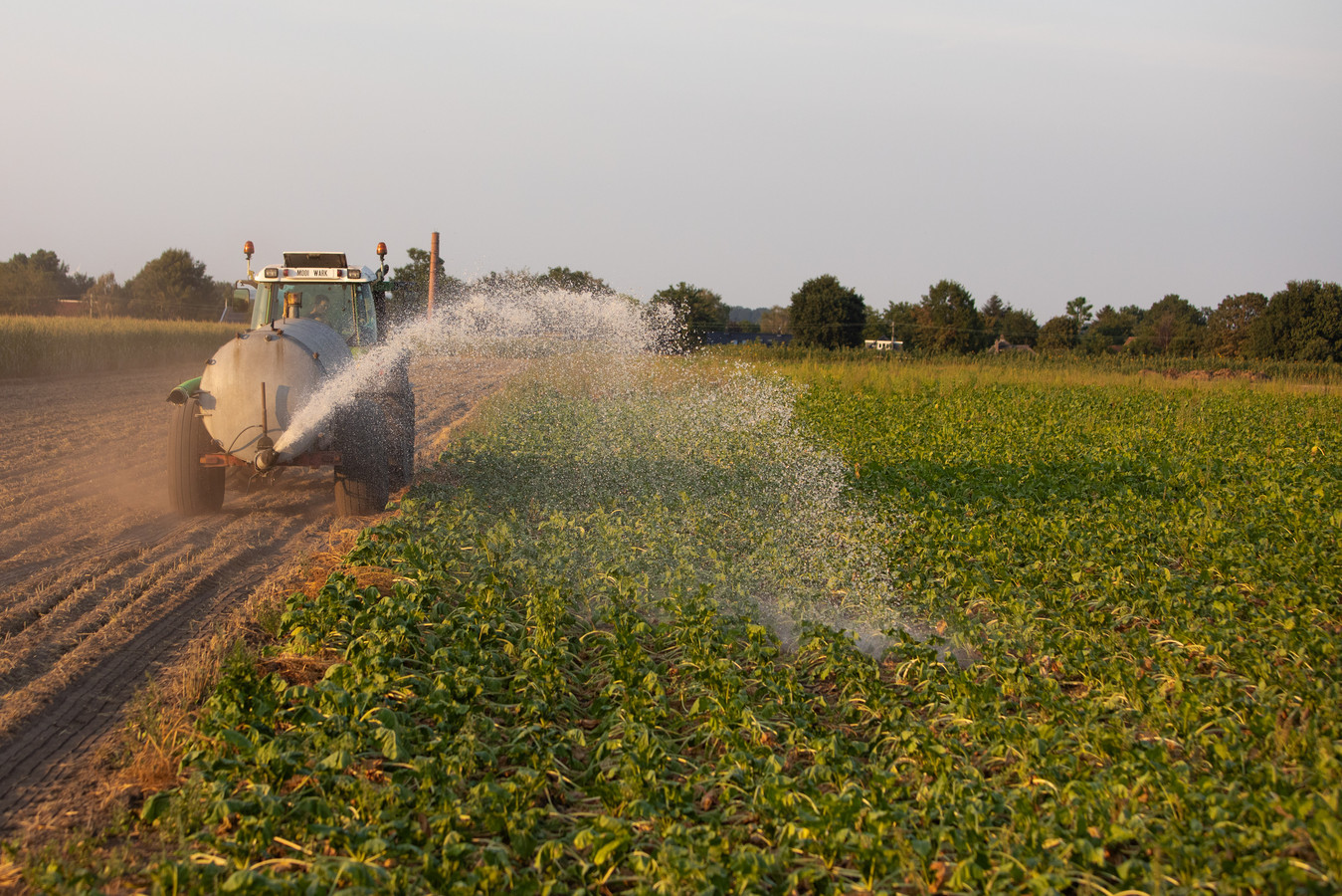 In de strijd tegen de droogte in de Achterhoek, heeft dijkgraaf Hein Pieper gisteren in deze krant een paar wilde ideeën gelanceerd. Foto ter illustratie.