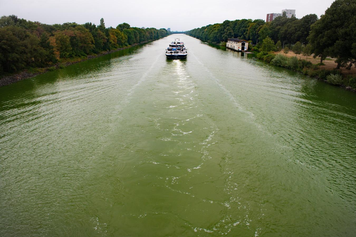 Ook het Maas-Waalkanaal kleurt groen-blauwig.
