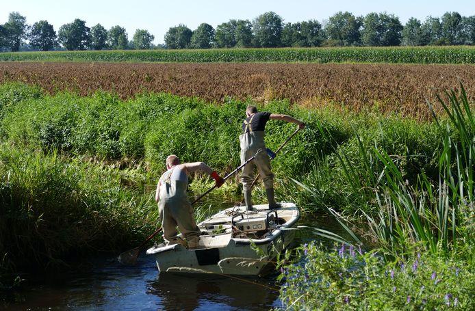 De reddingsactie voor vissen in de Strijpsche Beek van afgelopen woensdag.
