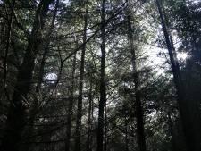 Droogte eist tol: bomen uit voorzorg gekapt in Haaksbergen