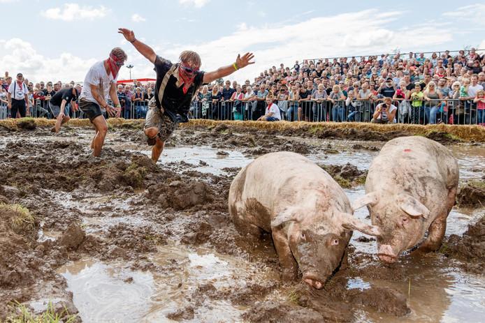 Zwientie tikk'n blijft immens populair tijdens het Dicky Woodstock Festival.