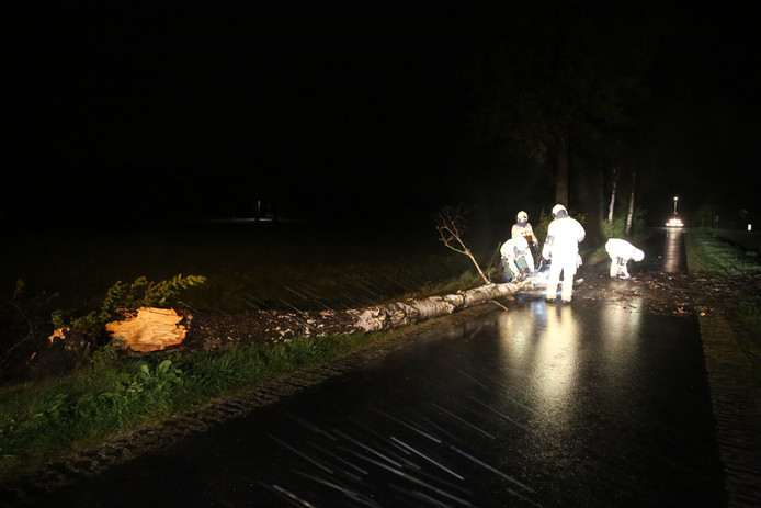 Ook in Beerzerveld moest de brandweer aan de slag om een boom die over de weg was gewaaid weg te halen.