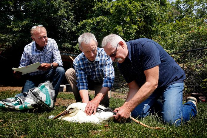 Ben Heerink(l) en Sander Wansing van Vogelwerkgroep Losser. Rechts Piet van Andel van de opvang in Herwijnen.