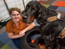 Run op huisdieren door lockdown heeft vervelend bij-effect: extra lang wachten op hulphond