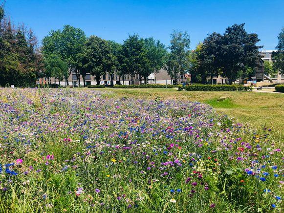 De bloemenweide aan speeltuin Jagersborg oogt kleurrijk.