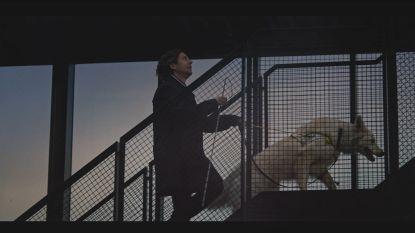 """Harry is blindgeboren: """"Mijn leven is zoveel eenvoudiger geworden dankzij mijn hulphond Oreo"""""""