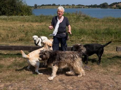 Recreatieschap weert grote groepen honden: 'Waar moet ik ze nu uitlaten?'