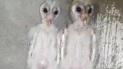 """Deze """"buitenaardse vogels"""" veroorzaken paniek in India"""