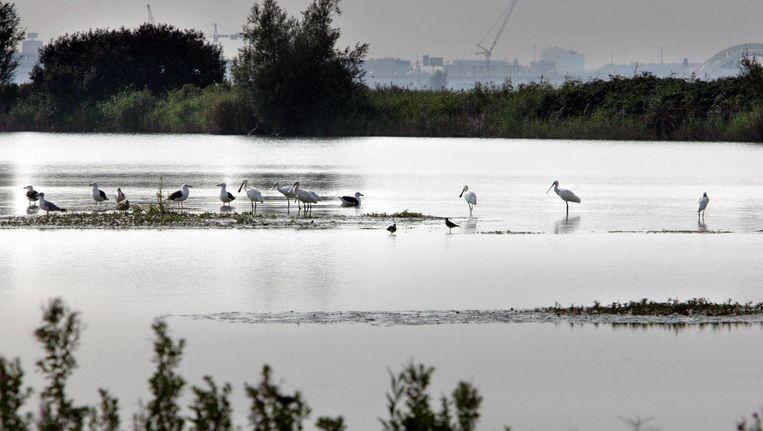 Het zijn rovers die de hele polder afromen, zegt veehouder Teunis Breedijk. Beeld Klaas Fopma
