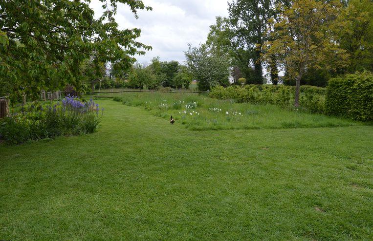 Ligt je gazon er erbarmelijk bij? September is gazonmaand bij uitstek. Zo leg je zelf je grasmat aan.