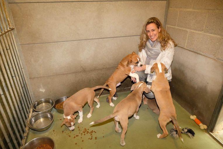 Sabine Slaets van de Dierenbescherming bij enkele opgevangen honden.