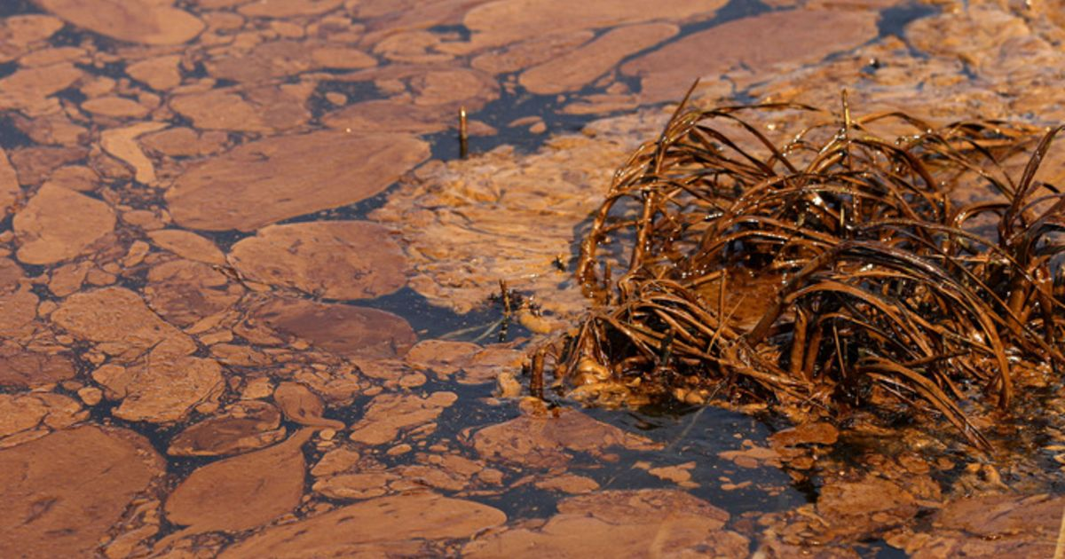 5 environmental consequences of oil spills thoughtco - 990×604