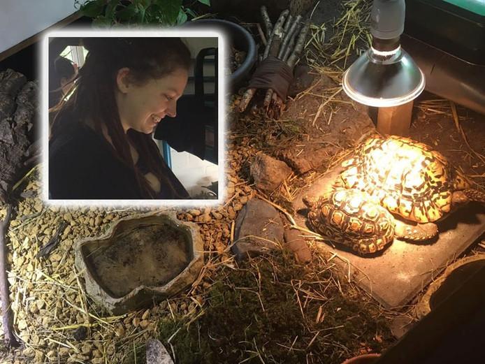 Jenni Schmidt en haar schildpadden