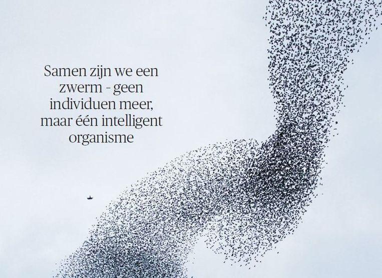 Spreeuwen, spectaculair zwermend boven de stad Utrecht. Beeld Luc Hoogenstein, HH