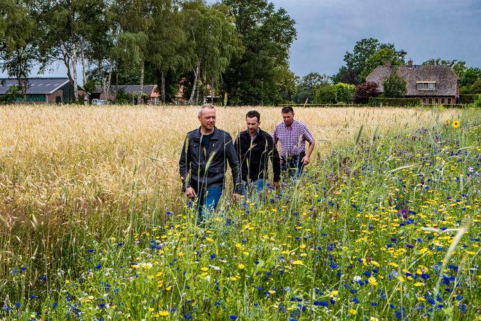 De boeren Geert Stevens uit Holterbroek (vooraan), Dijkerhoeker Arno Meijerman en Wim Steegink uit Espelo offerden enkele banen mais op voor wilde bloemen.