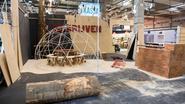 Gerooide boom Frankrijklei wordt 'Dwarsboom'