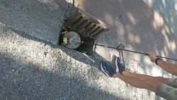 Schattige beelden: brandweerman redt eendjes uit rioolput