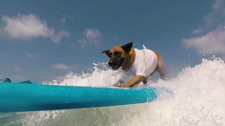 Poly, de surfende hond