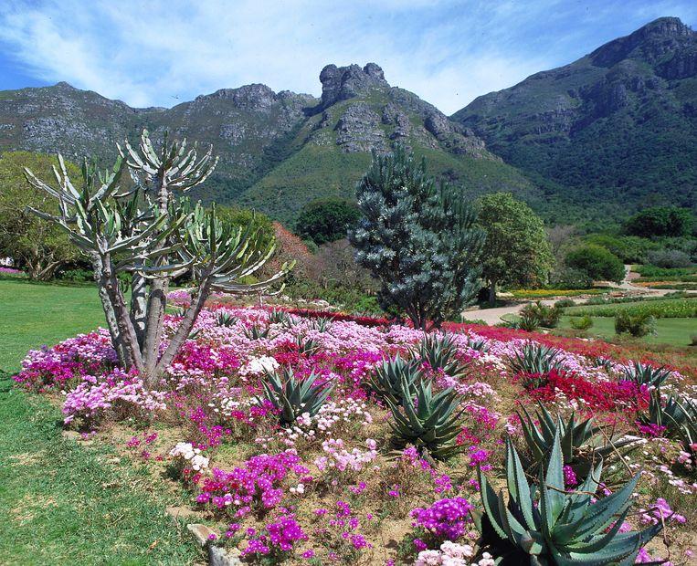 Botanische tuinen in Kirstenbosch. Beeld South African Tourism