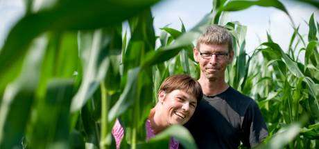 Achter elke hoek kan een griezel zitten in het maisdoolhof bij Stavenisse