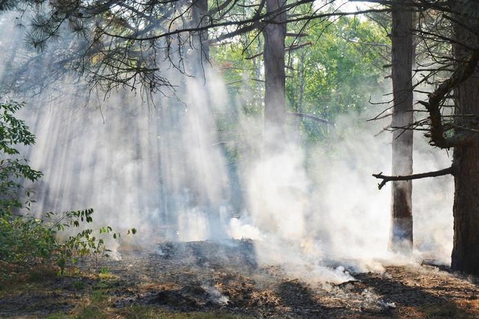 Bosbrand bij Budel-Dorplein.