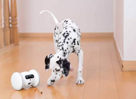 Varram Pet Robot