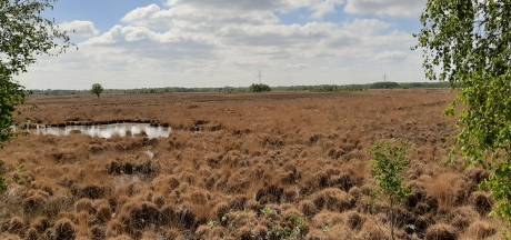 Bijna 1.600 handtekeningen voor behoud Natura 2000-status van Wierdense Veld