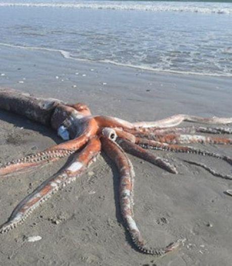 Zeldzame reuzeninktvis van 330 kilo spoelt aan op Zuid-Afrikaans strand