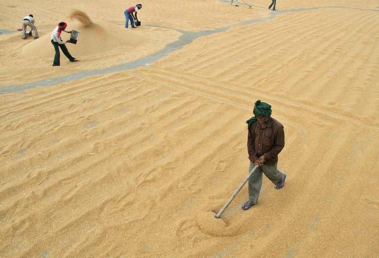 Graanmarkt in de Indiase stad Chandigarh. Vooral de armen in de wereld worden getroffen door de sterk gestegen voedselprijzen die mede zijn veroorzaakt door het afschaffen van buffervoorraden. Beeld Reuters