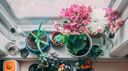 Hello groene vingers: 9 x de leukste DIY-plantenbakken