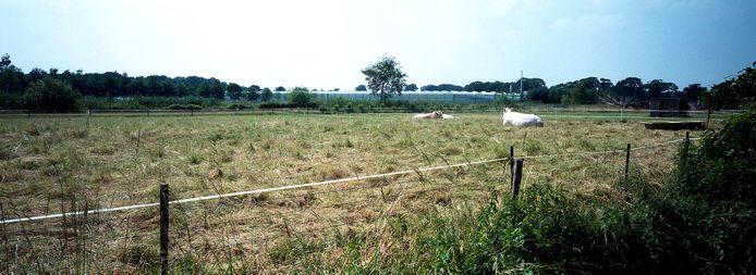 Koeien en kassen in het buitengebied van Haaren