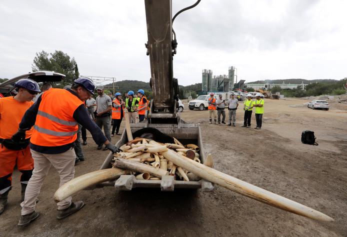 Franse politiemedewerkers gebruiken slijpmachines om 500 kilo ivoor te vernietigen.