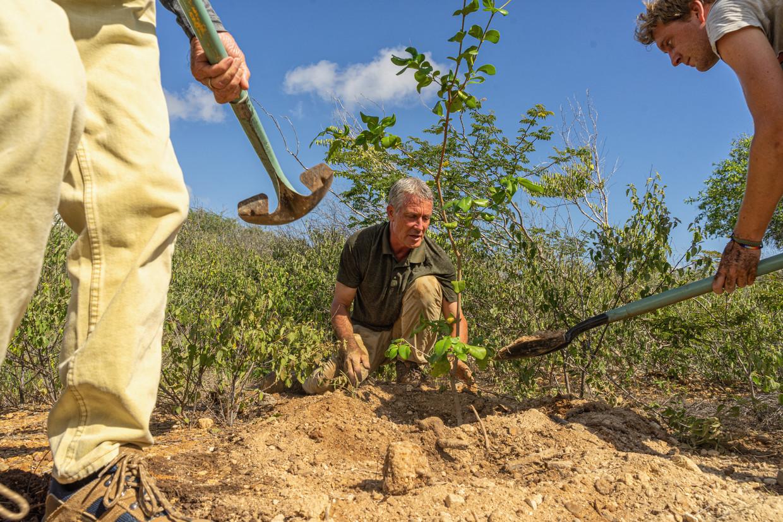 Johan van Blerk plant boomsoorten die  oorspronkelijk op Bonaire voorkwamen.