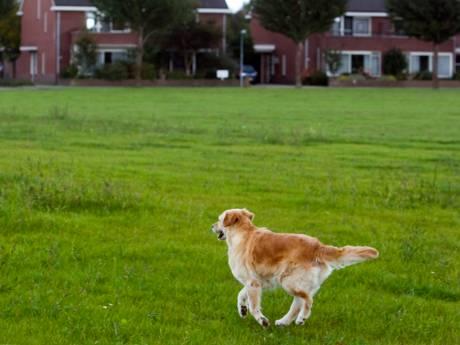 Op kaartje zien waar de hond los mag lopen