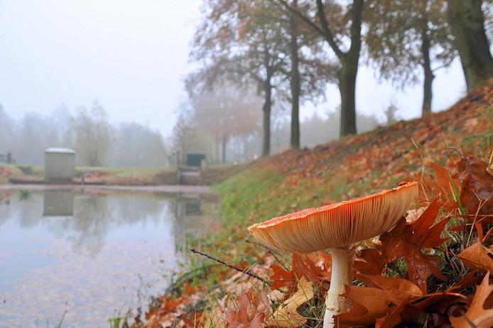 grijs novemberweer met nevel en mist op donderdagochtend in z.o. Brabant!